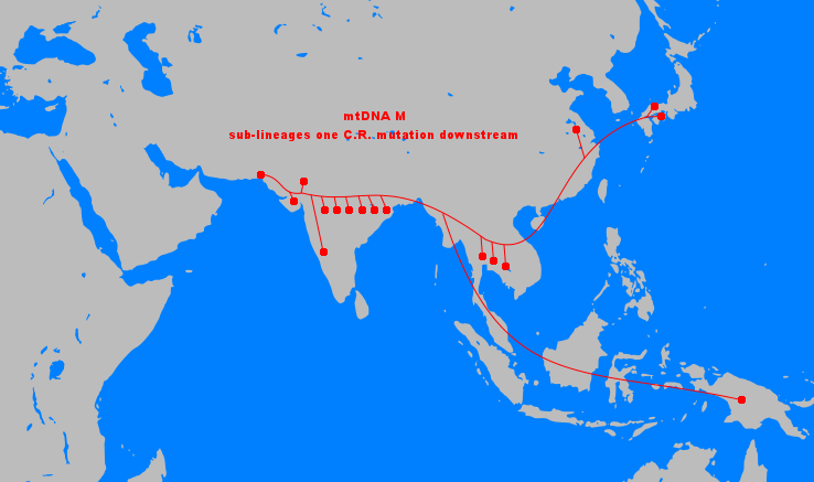 On the high mobility of mtDNA macro-haplogroups in Eurasia